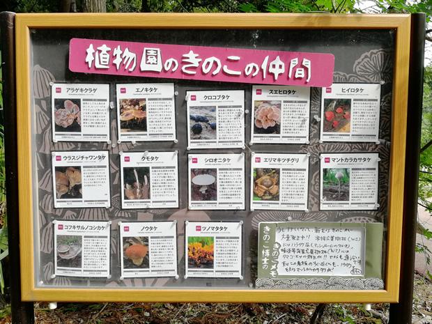 つくば植物園に自生するキノコ