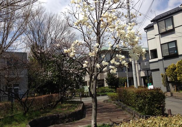 鴎友学園女子中学高等学校前の木